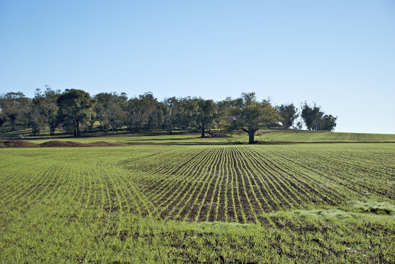 Imu sui terreni agricoli 2015: esenzioni e modalità di pagamento