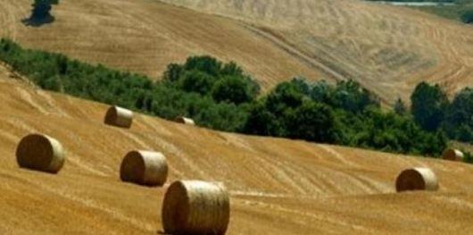 IMU terreni: tra esenzione e aliquota, il Fisco risponde