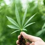 ETF Canapa per investire nella cannabis legale